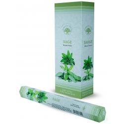 6 pakjes Sage wierook (Green Tree)