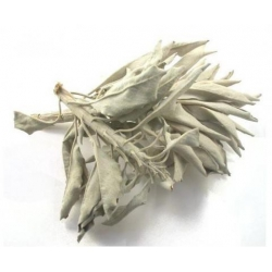500 gram Californische Witte Salie / White sage